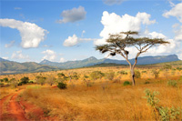Löwe jagen in Namibia