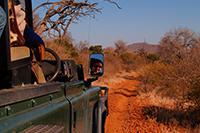 Löwe jagen in Südafrika